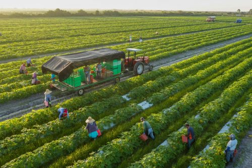 The chance to find solutions through environmental operations - Organic Fertilizers